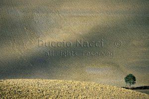 20 Crete senesi 1999